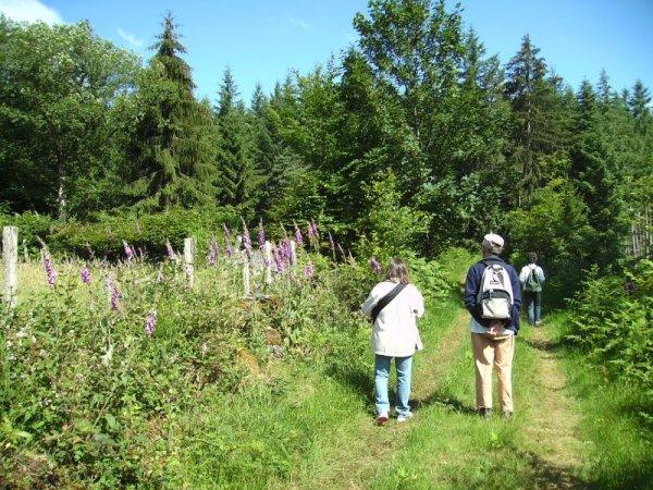 Formation géobiologie sacrée - Les campanules du Morvan