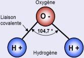 La molécule d'eau, un élément essentiel