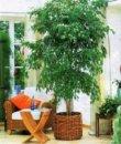 La qualité de l'air intérieur, plantes épuratrices